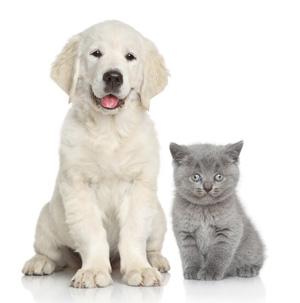 chat chien cohabitation