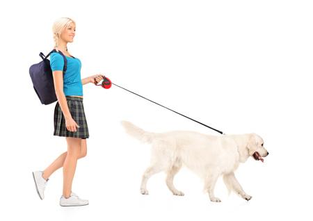 dresser son chien laisse